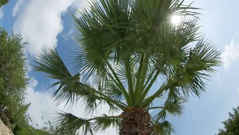Palm-Tree-Fisheye-00