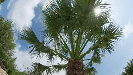 Palm-Tree-Fisheye-00