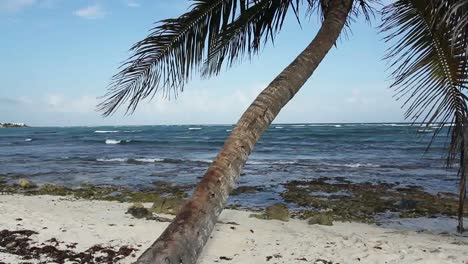 Palm-Tree-on-Beach-01