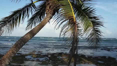 Palm-Tree-on-Beach-02