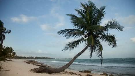 Paradise-Palms0