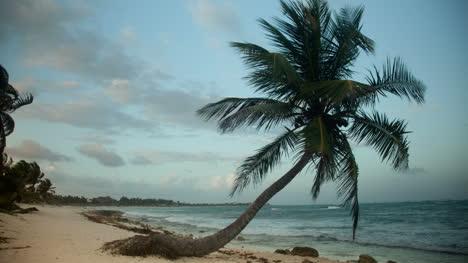 Paradise-Palms1