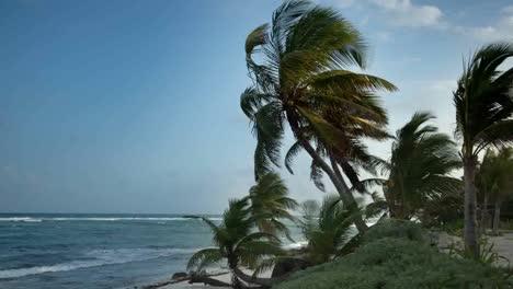 Paradise-Palms2