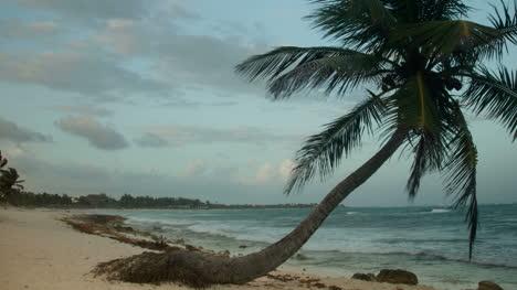 Paradise-Palms5
