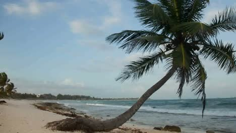 Paradise-Palms6