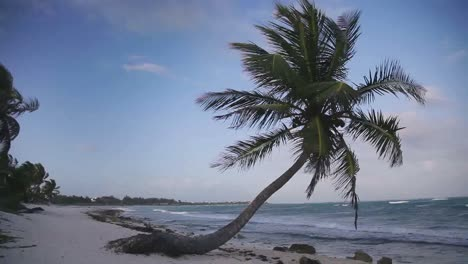 Paradise-Palms-on-Beach-00