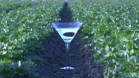 A-fish-swims-in-a-martini-glass-on-a-farm