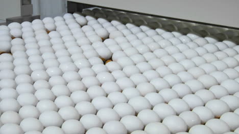 Eggs-move-along-a-conveyor-belt
