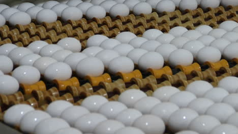 Huevos-Blancos-Se-Mueven-A-Lo-Largo-De-Una-Cinta-Transportadora-De-Fábrica-1