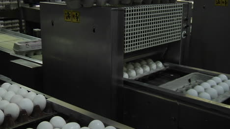 Automated-machinery-closes-carton-lids-on-eggs-in-a-factory