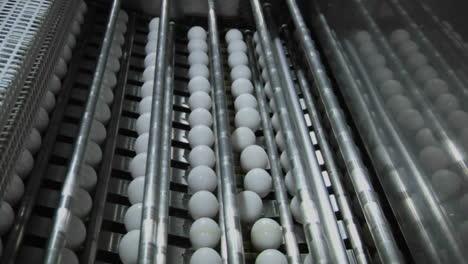 Automatisierte-Maschinen-Verarbeiten-Weiße-Eier-In-Einer-Fabrik