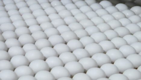White-eggs-move-along-a-factory-conveyor-belt