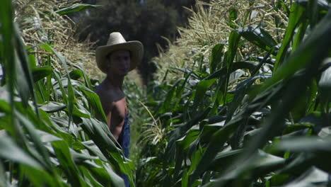 A-farmer-walks-through-a-corn-field