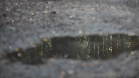 A-woman-jogs-across-a-puddle-reflecting-the-image-of-dozens-of-tress