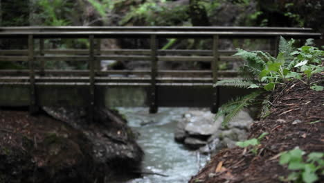 A-woman-runs-across-a-bridge-over-a-stream-in-a-wooded-area
