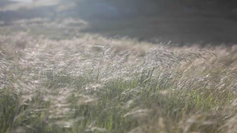 Una-Ráfaga-De-Viento-Continua-Sopla-A-Través-De-Un-Campo-De-Hierba