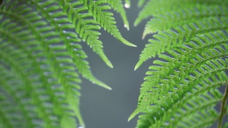 Closeup-of-fern-getting-rained-on