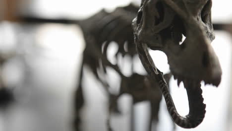 The-skeleton-of-a-dinosaur-comes-into-focus