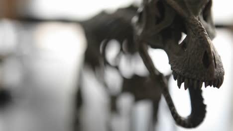 Esqueleto-De-Dinosaurio-En-Un-Museo