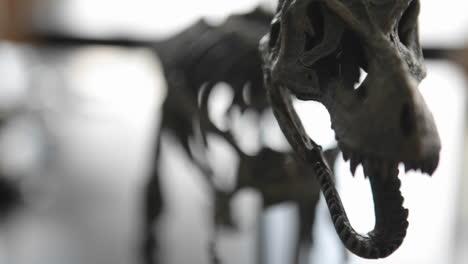 Das-Skelett-Eines-Prähistorischen-Tieres-Rückt-In-Den-Fokus