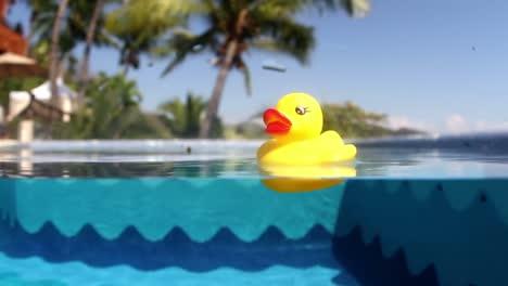 Plastic-Duckie-01