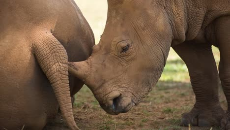 Rhino-02