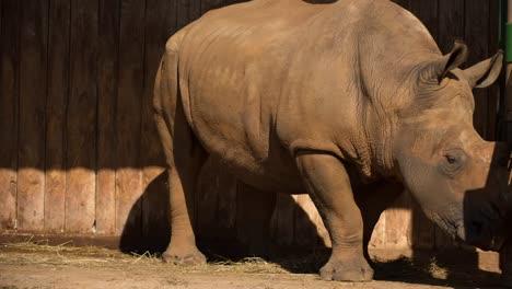 Rhino-08