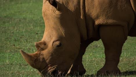 Rhino-09