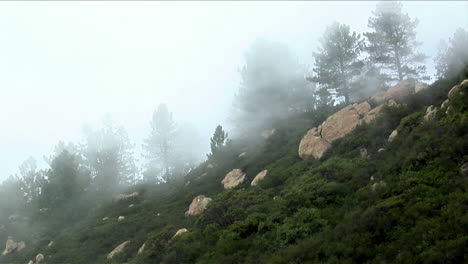 Fog-rolls-over-a-densely-forested-hillside-in-the-California-mountains-1