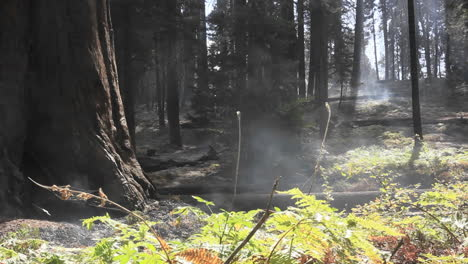 Mist-in-a-redwood-forest-1