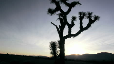 A-cactus-grows-in-the-desert