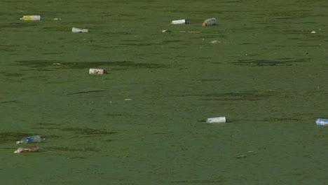 Bottles-float-in-a-waterway-full-of-algae