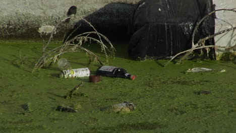 Bottles-and-other-garbage-floats-in-a-waterway-full-of-algae
