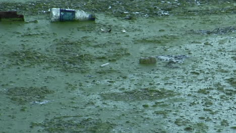 Bottles-and-other-garbage-floats-in-a-waterway-full-of-algae-1