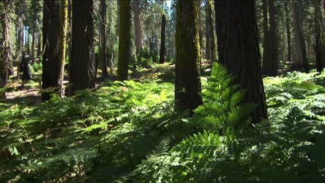 Ferns-grow-near-trees-in-the-forest