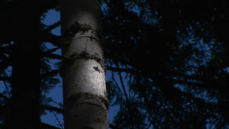 A-tree-trunk-glows-in-the-moonlight