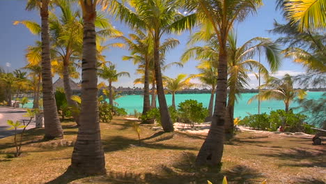 Tahitian-palm-trees-gently-blow-in-the-wind-with-turquoise-water-in-the-background-1