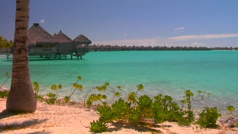 Tahitian-palm-trees-and-huts-rest-over-turquoise-water-Slow-zoom-in-1