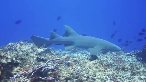 Shark-00
