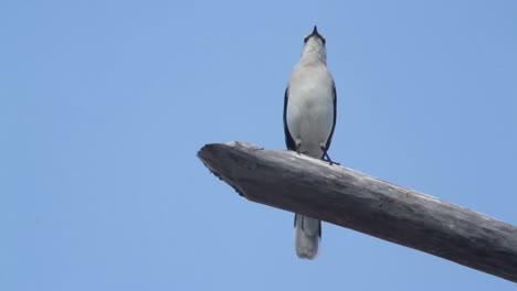 Sian-Kaan-Bird0
