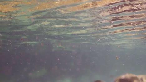 Snorkelling-09