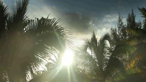 Sunlight-Palms0