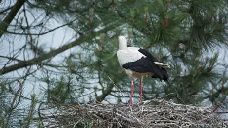 Teich-Birds-05