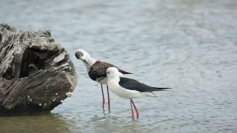 Teich-Birds-09