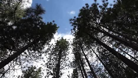 Tree-Pan-Video-01
