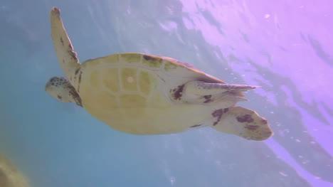Turtle-19