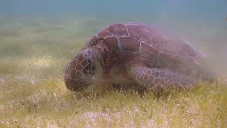 Turtle-22