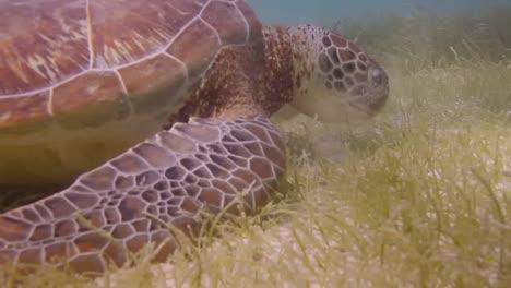 Turtle-28