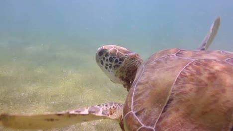Turtle-32