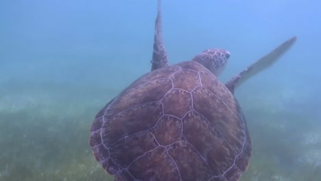 Turtle-72